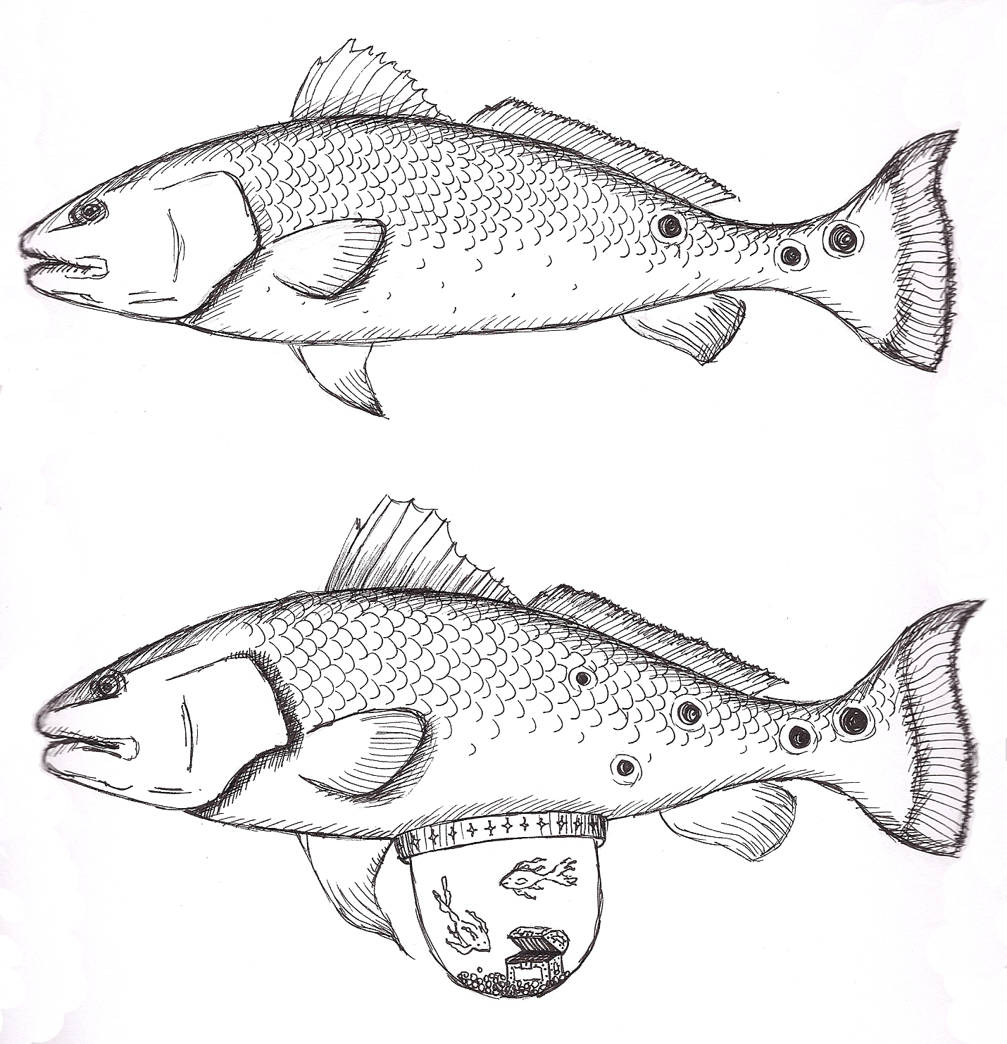 Redfish Art Redfish tank sketchesRedfish Drawing