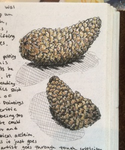 MGF pinecones sketch